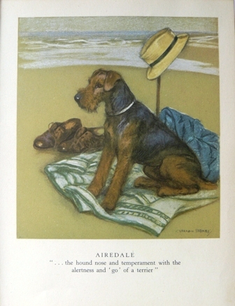 Airedale by George Vernon Stokes