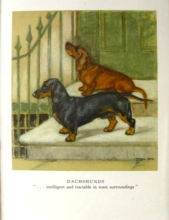 Dachshunds by George Vernon Stokes